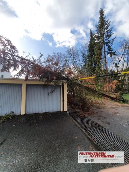 Baum auf Garage